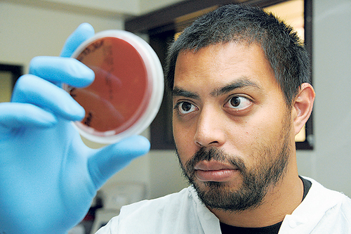 Robin Kaai, KCC STEM student examines red blood cells. He won recognition for his work on using genetically modified viruses to produce antibodies. Photo: Craig T. Kojima, Honolulu Star Advertiser.