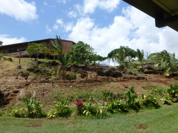 Mala (Garden) behind Manele Building. Photo: KCC